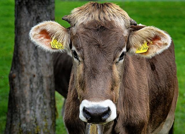 Czym cechują się nowoczesne ruszta dla bydła?